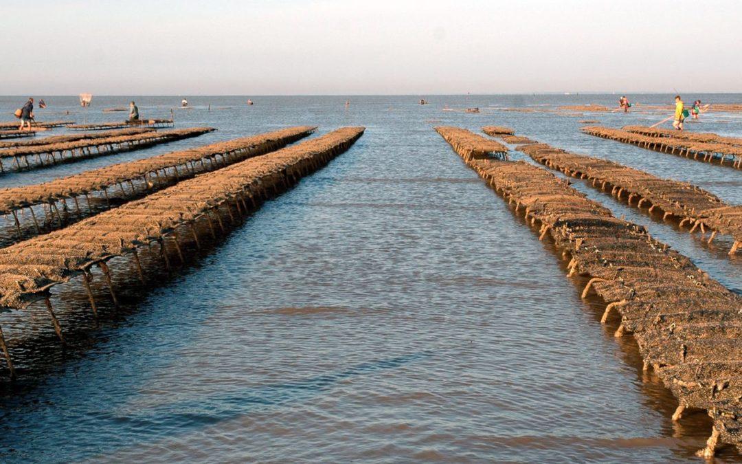 Retrouvez les Huîtres Vendée Atlantique sur vos marchés pour les fêtes de fin d'année