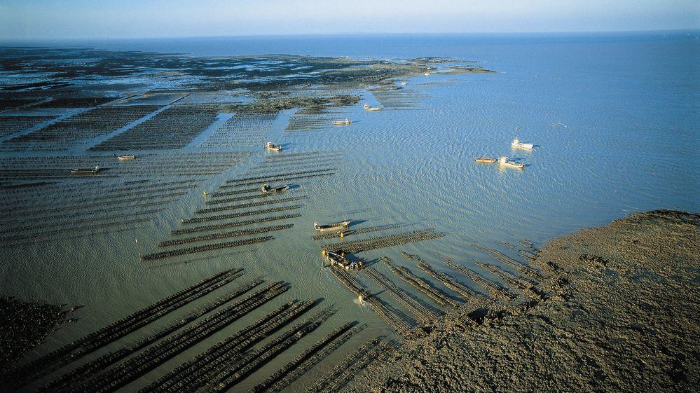 Route de l'huître : dégustation et découverte des Huîtres Vendée Atlantique